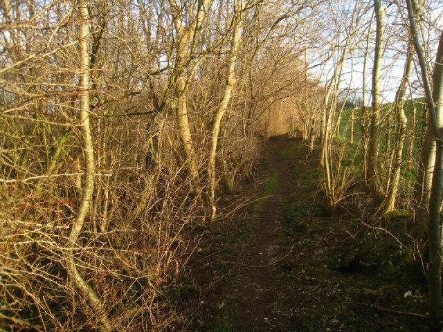 Path along Freemantle Park Down