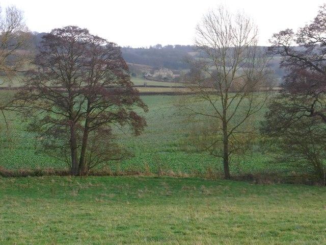 Alders along the Beesmoor Brook