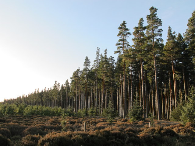 Slaley Forest