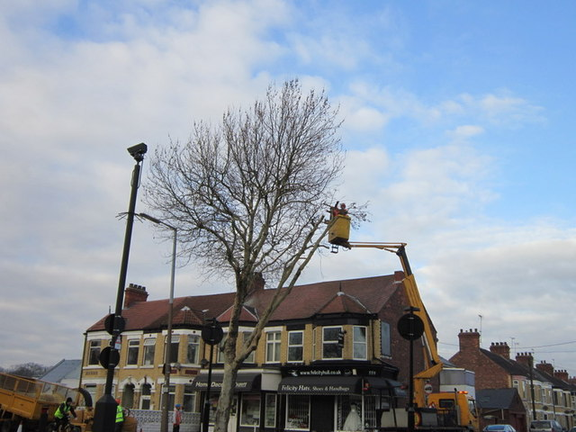 Topping off the trees down Holderness Road, Hull
