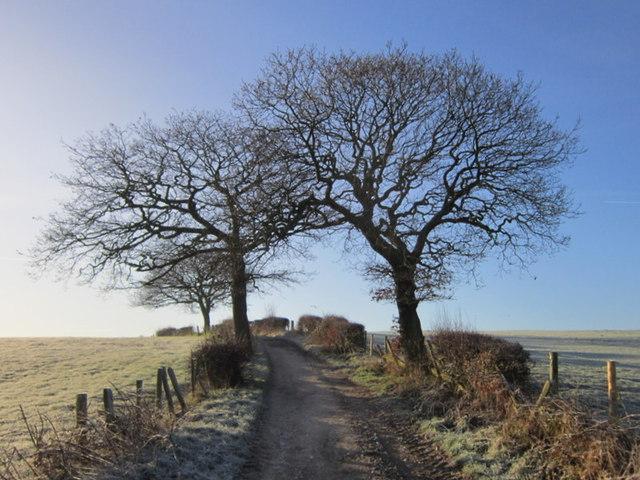 Scholebrook Lane towards Scholebrook Farm