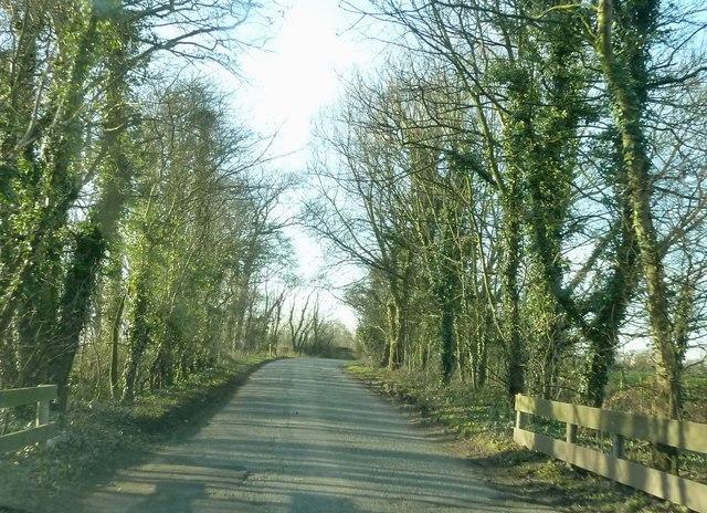Whin Lane near Tarnbrook