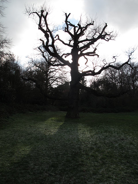 Winter tree, Frank's Park