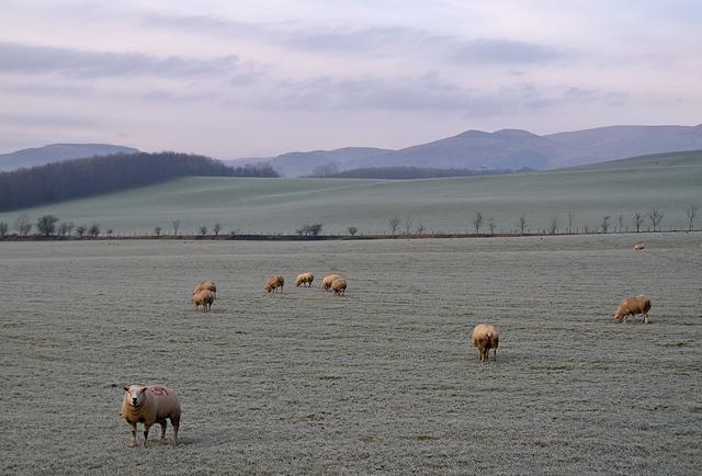 Farmland near Grassmainston