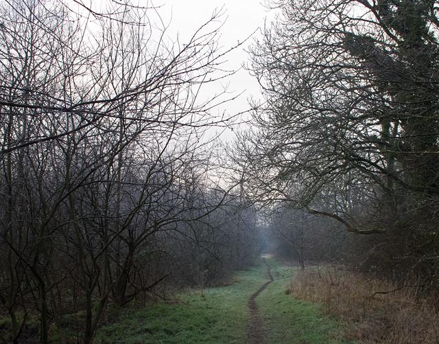 Track in Birkhill plantation