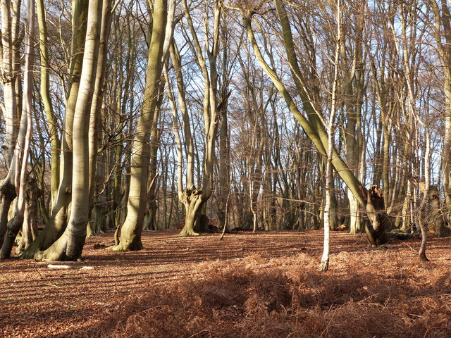 Broadstrood, Epping Forest, near Loughton