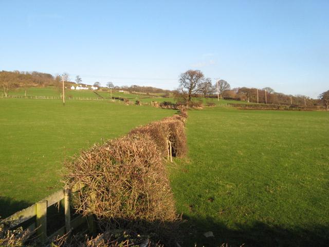 Fields below Fron