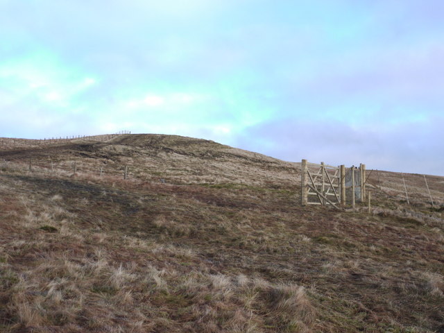 New deer-fence on Whitehope Heights