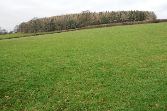 Wood above Upper Farm