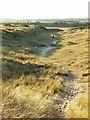 NU2605 : Path through the Dunes - Warkworth Beach by Christine Westerback