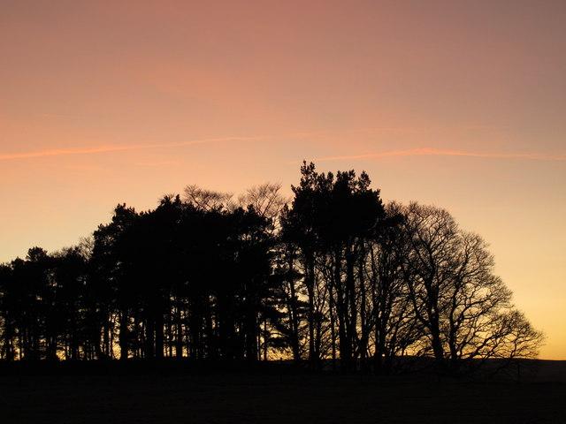Sunset over a plantation above East Allendale