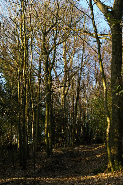 Bridleway east of High Ashes Farm
