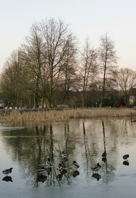 The village pond, Tylers Green