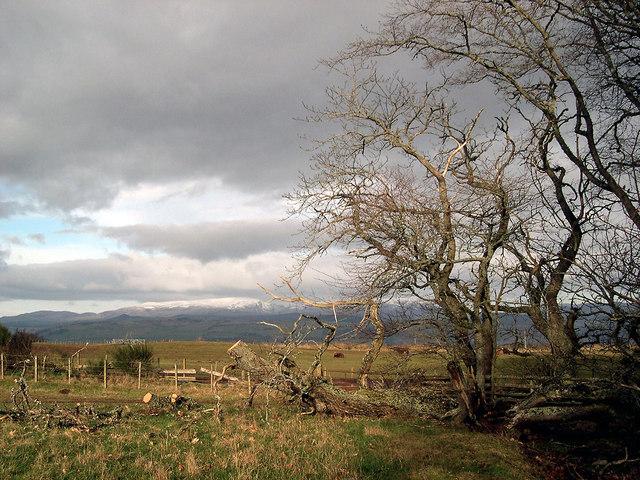 Fields at Upper Braefindon