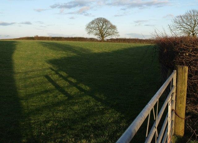 Field beside Northern Lane