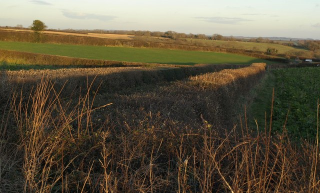 Hedges and fields above Berry Hill