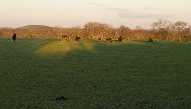 Late winter sun, Northern Lane