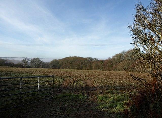 Field by Willow Tree Farm