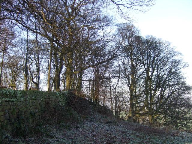 Howgarth Wood