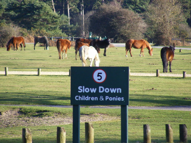 New Forest Ponies Make the Most of the Empty Camp Site at Round Hill