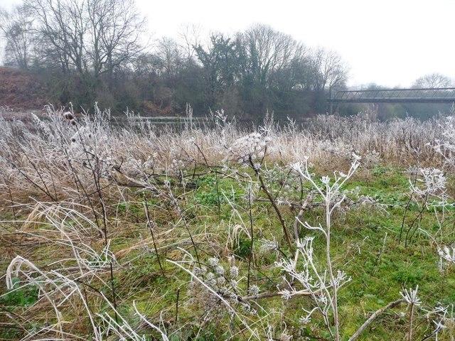 Frost flowers near Rodhill Corner