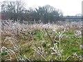 SE3330 : Frost flowers near Rodhill Corner by Christine Johnstone
