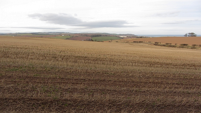 Stubble above Eyemouth