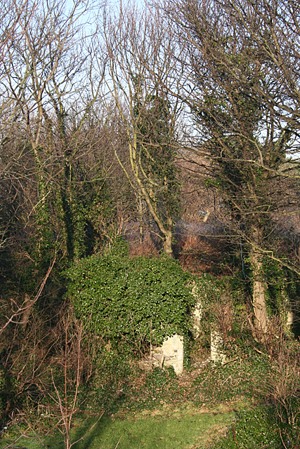 Ivy-covered Ruin