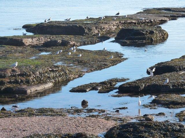 Exposed rocks near Hollicombe Head