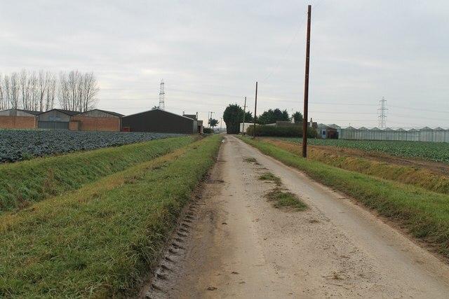 Ten Acre Drove towards New Farm