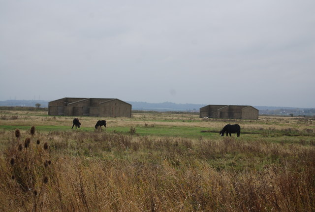 Horses by derelict barracks