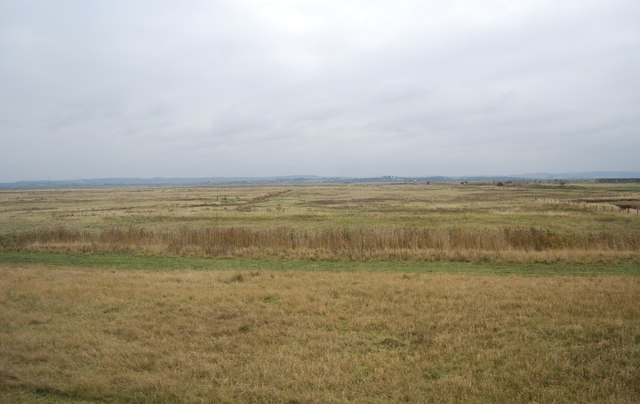 Cliffe Marshes