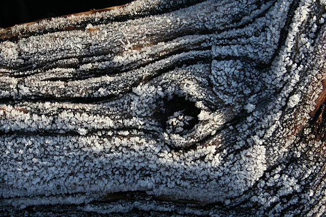 Frosted Log