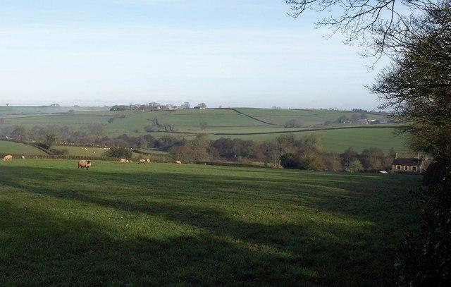 Field, Sampford Courtenay