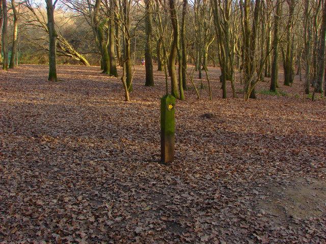 Waymarker in the woods