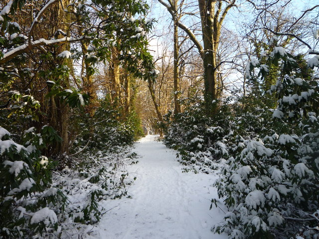Track through the rhododendron bushes on banks of the River Clyde