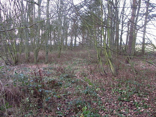 Oxford Wood