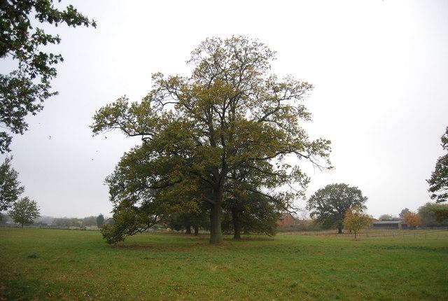 Parkland landscape near Herne