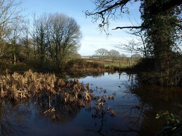 Pond, Greenslade