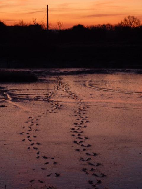Footprints in the mud at Oare Creek