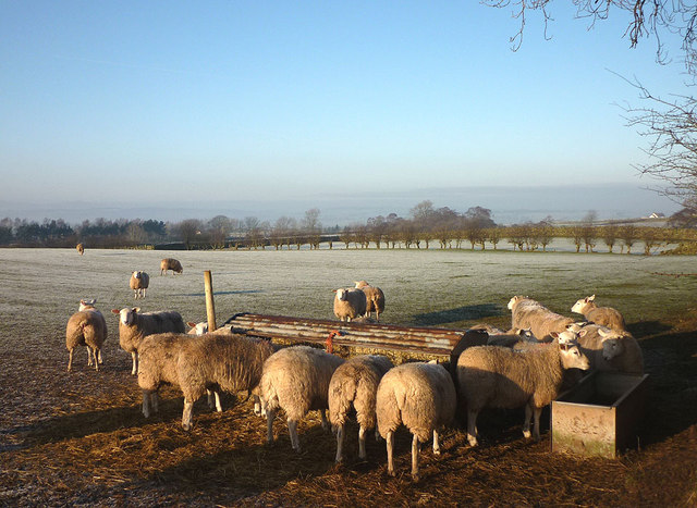 Sheep feeder near Row, Ousby
