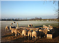 NY6235 : Sheep feeder near Row, Ousby by Karl and Ali