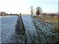 NY9864 : Tyne flood bank by Oliver Dixon