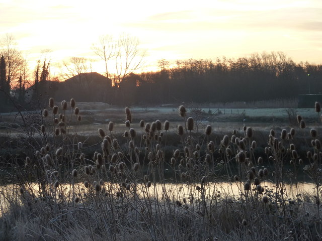 Frosted teasels by a pond near Oare Creek