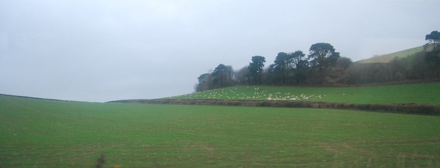 Farmland between Green Lane and the A35