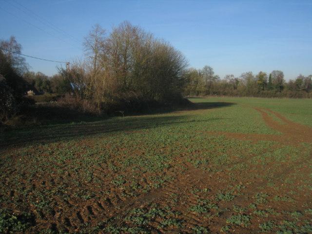 Winter crop - Breach Farm