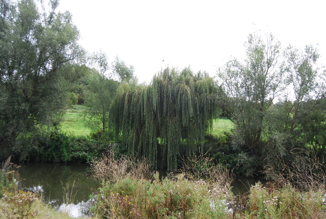 Weeping Willow, River Medway