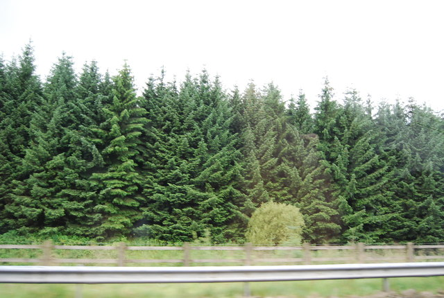 Woodland by the A74(M)