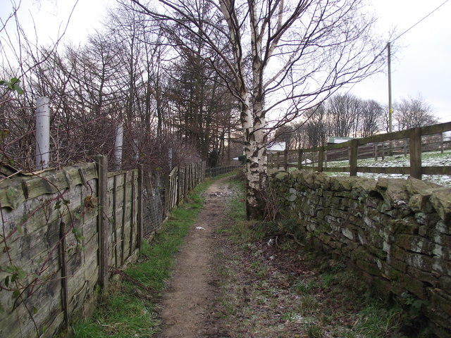 Footpath and Silver Birch