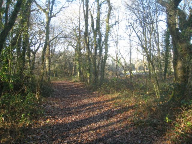 Footpath in woodland